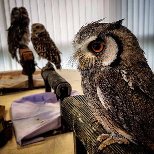 AYOM staff raise £194 for Owl charity Barn Owl Bill